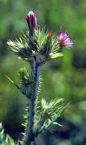 Our, Most, Invasive, Non-native, Plants