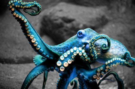 why octopuses yes that is the correct plural form of