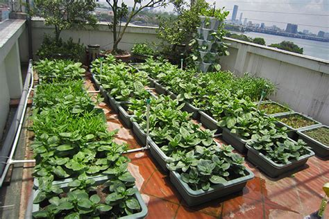rooftop vegetable gardens rooftop vegetable gardens catching on in hanoi saigoneer