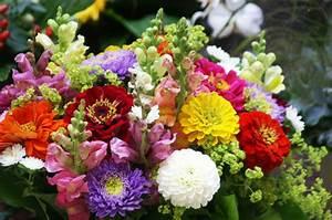 Blumen Im Sommer : blumen angerer blumen pflanzen gartengestaltung dekoration ~ Whattoseeinmadrid.com Haus und Dekorationen