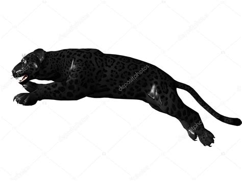 jumping black panther stock photo  wampa