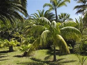 Palmier De Jardin : jardin botanique de mad re jardinsud ~ Nature-et-papiers.com Idées de Décoration