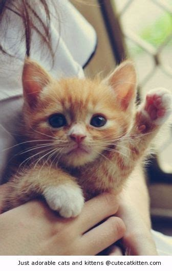 waving cat waving goodbye cat kitten