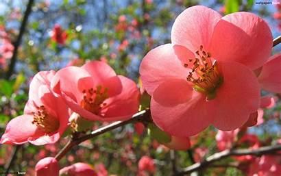 Spring Flower Backgrounds Flowers Wallpapers Break Waited