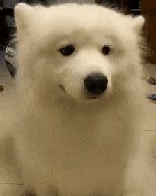 Funny Dancing Dog Memes