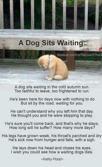 cheryl kay    google pets  adoption dogs