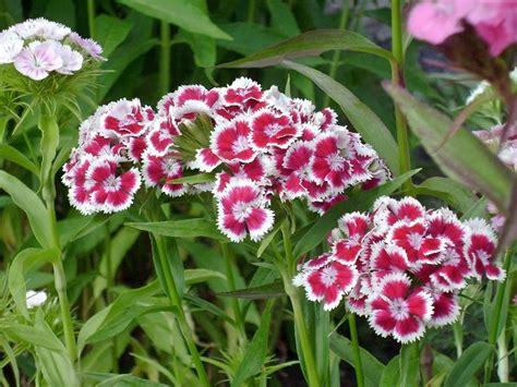 Ganzjahres Pflanzen by K 252 Belpflanzen