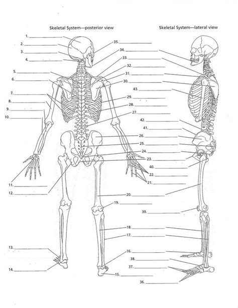 anatomy labeling worksheets search i
