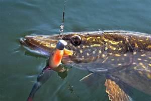 Bilder Mit Fischen : pelagisch angeln auf hecht dr catch besser angeln ~ Frokenaadalensverden.com Haus und Dekorationen