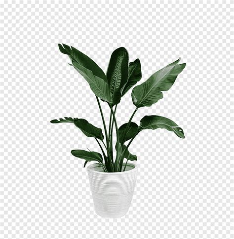 พืชสีเขียวกระถาง, ดอกไม้, กระถางดอกไม้ png   PNGEgg