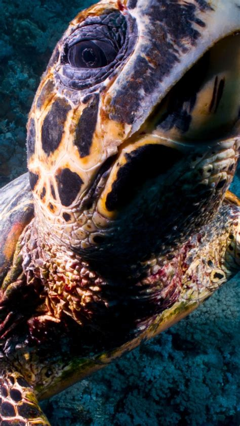 wallpaper turtle bloody bay wall  cayman