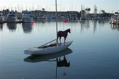 Horses On A Boat by 187 S Sailing Anarchy