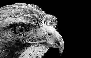 Tierbilder Schwarz Weiß : tiere in schwarz und wei von lukas holas ~ Markanthonyermac.com Haus und Dekorationen