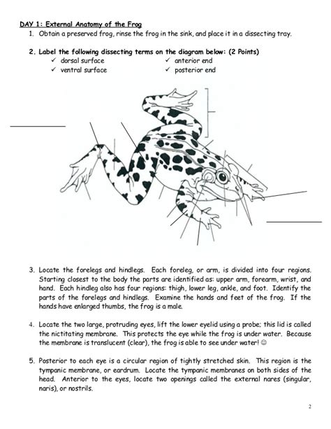 frog dissection worksheet answer key worksheets