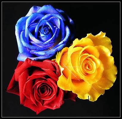 Roses Yellow Glitter