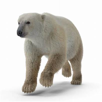 Cylinders Refrigerant Polar Bear Sustainable Stainless Steel