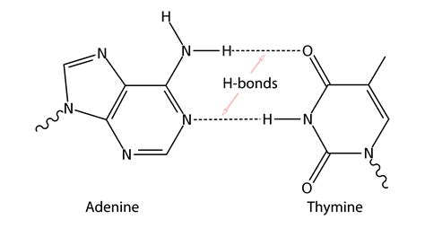 bond linking monomers types with concepts and exles