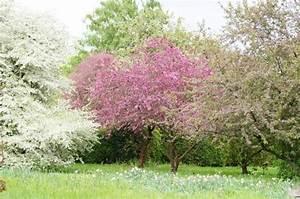 Baum Fällen Kosten Forum : neue beete farben und pflanzen im garten mein sch ner ~ Jslefanu.com Haus und Dekorationen