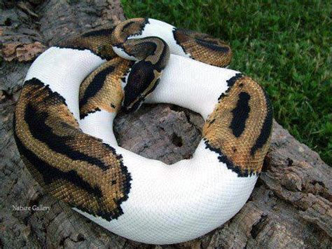 Snake Breeds Yikes Does Anyone Know Snake Breed Funny Animal Photo