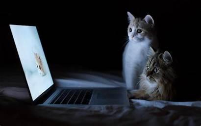 Cat Funny Desktop Wallpapers Wallpapersafari