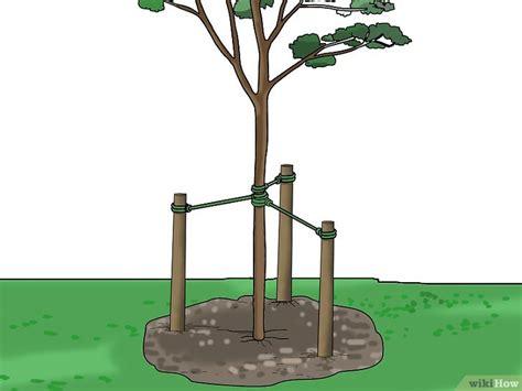 manieres de tuteurer  arbre ou  arbuste wikihow