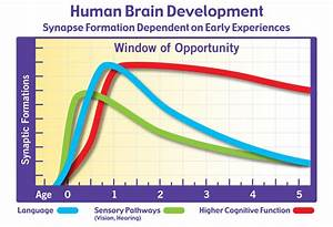 Brain Development And Synaptic Formation Chart The