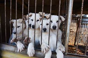 more dogs rescued from south korea