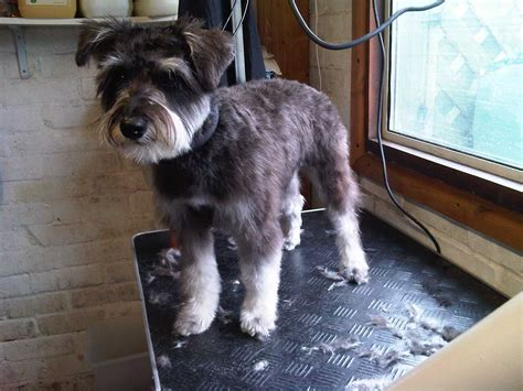 12 Best Dogs Need Haircuts Images On Pinterest