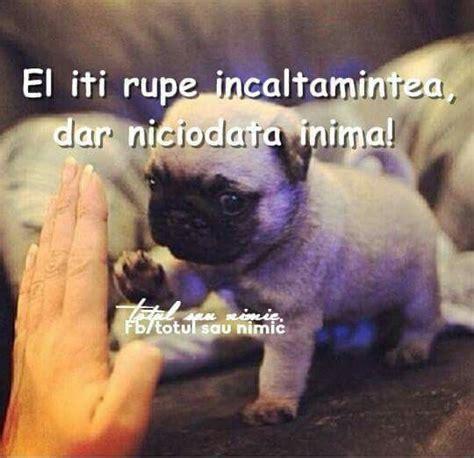 Glueckliche Haustiere Was Hunde Brauchen by Pin Alex Prodan Auf Glume Hunde Spr 252 Che Tiere Und