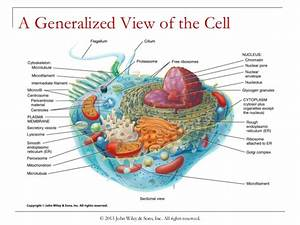 Global warming diagram ks2 choice image how to guide and refrence diagram of generalized cell choice image how to guide and refrence ccuart Choice Image