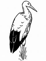 Stork Coloring Birds Printable Recommended sketch template