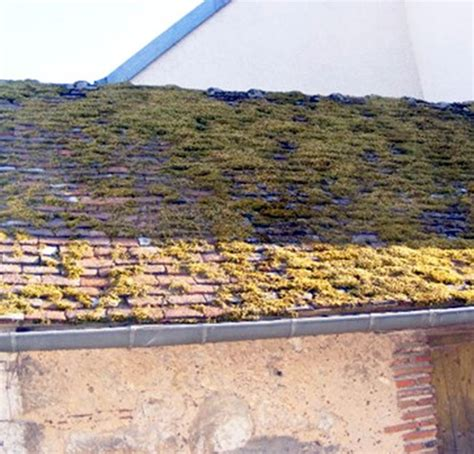 mousse sur toiture tuiles entretien sp 233 cifique d 233 moussage de toiture