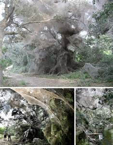 Largest World Biggest Spider Web
