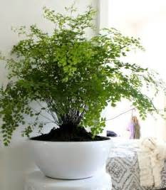 17 best ideas about house plants on plants indoor plants and indoor plants low light