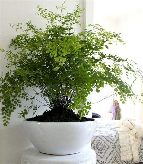 Plants For Bathroom India by 17 Best Ideas About House Plants On Plants