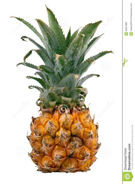 Ripe Small Pineapple Royalty Free Stock Photos Image