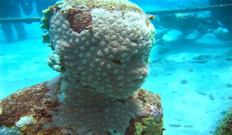 How Artificial Reefs Help Nature Restore Itself?. Living Room Bistro Menu. Separate Living Room Into Bedroom. Living Room Playroom Combo. Living Room Cardio Workouts. The Living Room Edinburgh Address. Living Room Club Dress Code. Living Room Furniture Sale Nj. Pictures Of Curtains For Living Room
