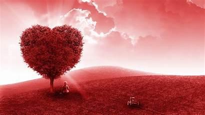 Heart 4k Tree Wallpapers