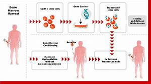 Genetix Pharmaceuticals  A Gene Therapy Company      Takes