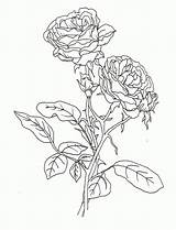 Coloring Rose Flower Printable Roses Compass Realistic Detailed Colouring Pretty Adults Sheet Template Sheets Popular Templates Colorin Getcolorings Coloringhome Library sketch template