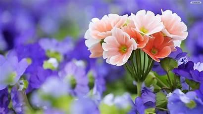 Flowers Desktop Wallpapers Flower Pretty Backgrounds Background