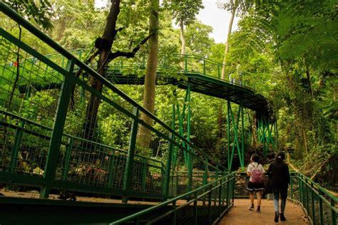 menyusuri forest walk hutan kota babakan siliwangi bandung