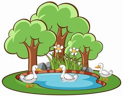 Ducks Pond Scene Isolated Vector Freepik Birds