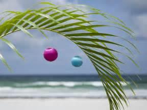 Florida Christmas Palm Tree