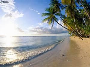 Bilder Meer Strand : palmen am strand ~ Eleganceandgraceweddings.com Haus und Dekorationen