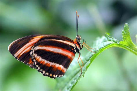 butterfly macros  stock photo freeimagescom