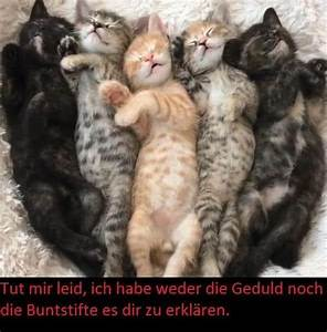 Emotionale Bilder Mit Sprüchen : lustige bilder mit spr chen witzige bilder kostenlos downloaden ~ Eleganceandgraceweddings.com Haus und Dekorationen