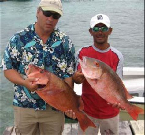 mutton snapper belize fishing reports ambergris caye