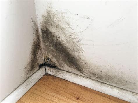 toxic black mold