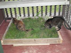 Pin by carrie cohen mcdonald on cat enclosures and houses for Can you train a cat to go outside for bathroom